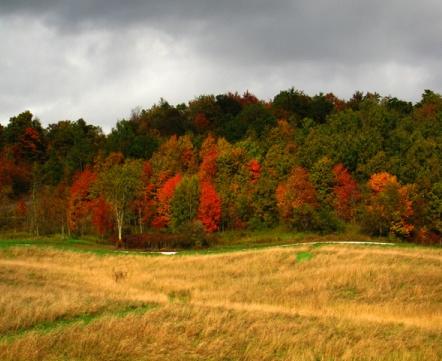 Field during autumn