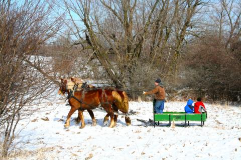 Working the land with draft horses...